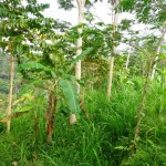 Land for sale in Ubud Bali LUB161