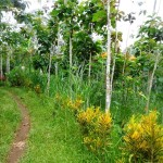 Land for sale in Ubud Bali - LUB162