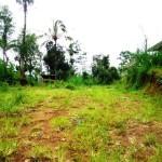 Land for sale in Ubud Bali - LUB166