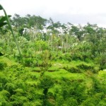 Land For sale in Ubud LUB167