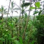 Land for sale in Ubud Bali - LUB170