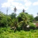 Land for sale in Canggu Bali - LCG080