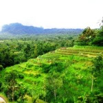 Land for sale in Tabanan Bali LTB013