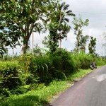 Land for sale in jatiluwih tabanan bali LTB012