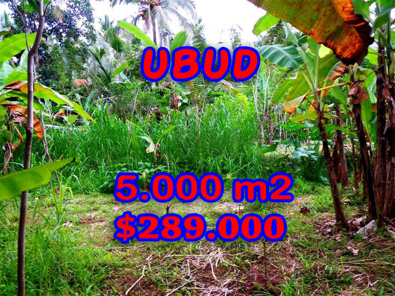 Land-in-Ubud-Bali-for-sale