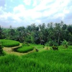 Land for sale in Tabanan Bali