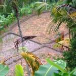 Ubud land for sale in Ubud