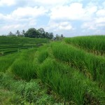 Land for sale in Tabanan BaliLand for sale in Tabanan Bali