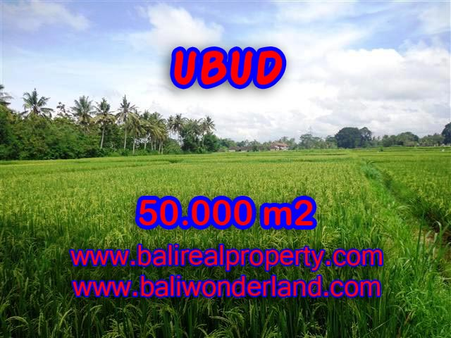 Exotic Land for sale in Ubud Bali, paddy view by the river in Central Ubud – TJUB351