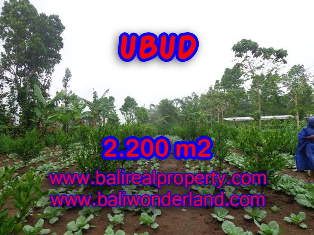 Land for sale in Ubud, Fantastic view in Ubud Tegalalang Bali – TJUB348
