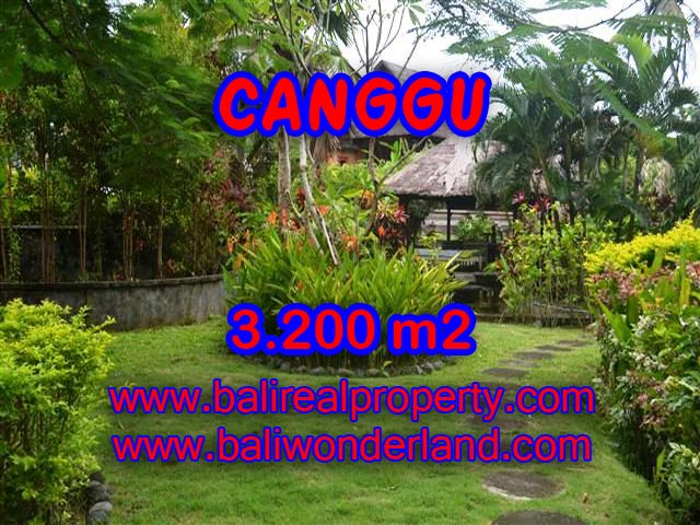 Fantastic Land for sale in Bali, Rice fields and river view in Canggu– TJCG129