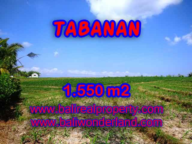 Land in Tabanan Bali for sale, Outstanding view in Tabanan selemadeg – TJTB134
