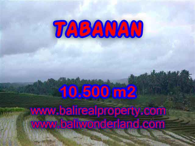 Amazing Land in Bali for sale in Tabanan Selemadeg Bali – TJTB095