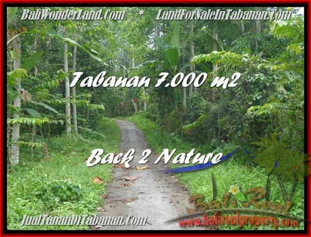 Beautiful PROPERTY 7.000 m2 LAND SALE IN TABANAN BALI TJTB176