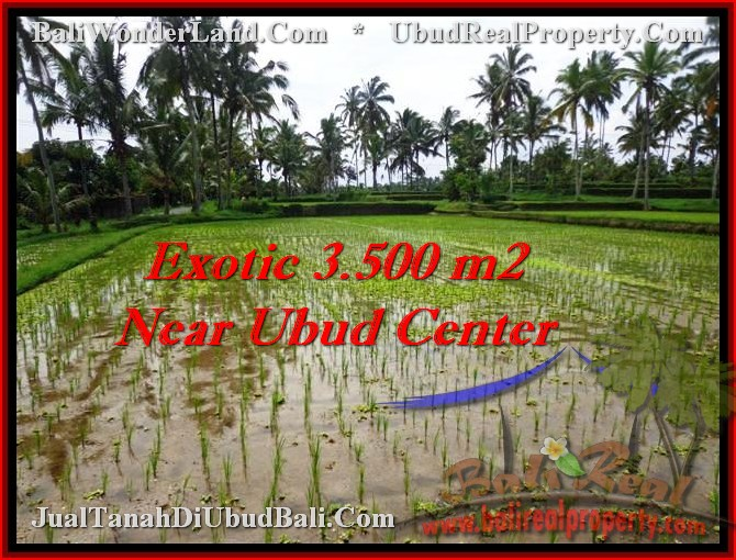 Affordable LAND SALE IN Ubud Tegalalang TJUB477