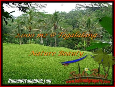 Magnificent PROPERTY 2,000 m2 LAND SALE IN UBUD BALI TJUB490