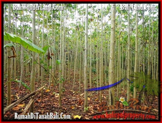 Exotic PROPERTY 3,000 m2 LAND SALE IN TABANAN BALI TJTB159