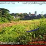 LAND IN Canggu Batu Bolong FOR SALE TJCG178