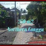 Beautiful LAND FOR SALE IN Canggu Pererenan BALI TJCG182
