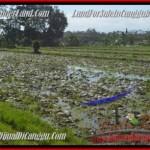 Exotic PROPERTY Canggu Pererenan BALI LAND FOR SALE TJCG183