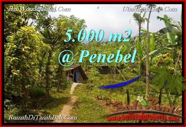 Beautiful PROPERTY 5,000 m2 LAND FOR SALE IN Tabanan Jatiluwih TJTB215