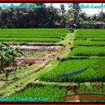 Exotic PROPERTY Canggu Pererenan BALI LAND FOR SALE TJCG187