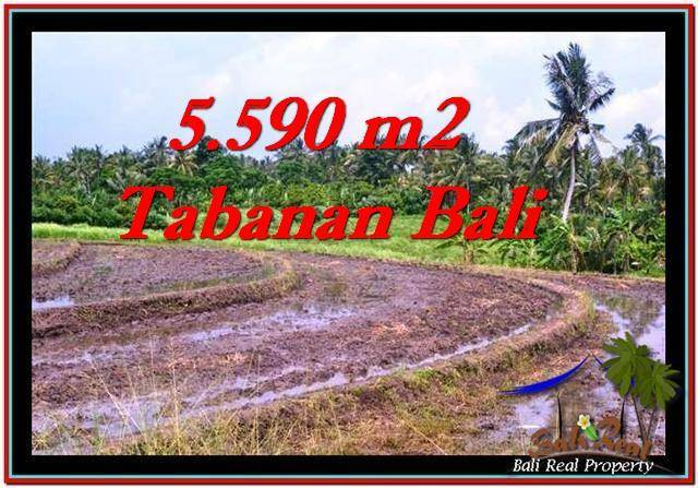 Beautiful TABANAN BALI 5,590 m2 LAND FOR SALE TJTB257