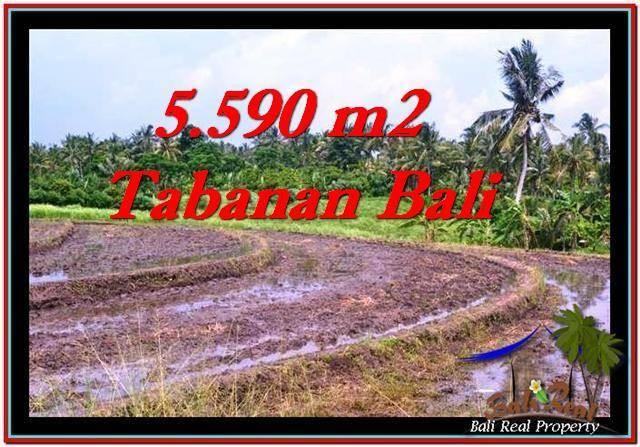 Beautiful TABANAN BALI 5,590 m2 LAND FOR SALE TJTB257