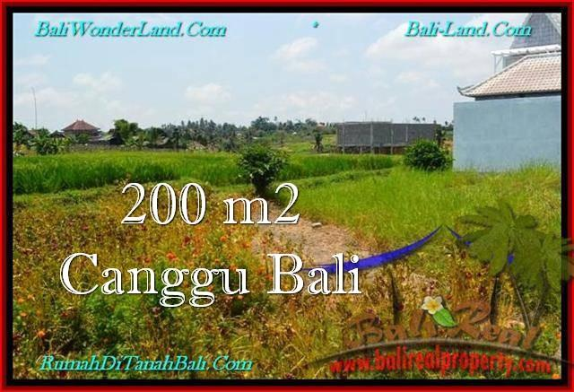 FOR SALE Affordable PROPERTY LAND IN Canggu Pererenan BALI TJCG191