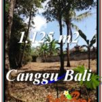 FOR SALE Exotic PROPERTY LAND IN Canggu Pererenan BALI TJCG208