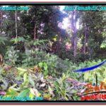 Exotic PROPERTY Canggu Pererenan BALI LAND FOR SALE TJCG211