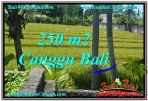 Magnificent 250 m2 LAND FOR SALE IN CANGGU BALI TJCG207