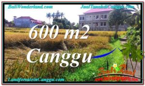 Beautiful 600 m2 LAND SALE IN CANGGU TJCG211