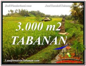 Beautiful 3,000 m2 LAND FOR SALE IN Tabanan Selemadeg TJTB328