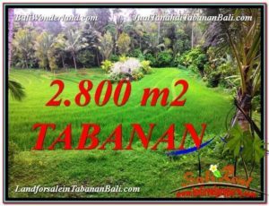 Affordable PROPERTY 2,800 m2 LAND IN Tabanan Selemadeg FOR SALE TJTB333