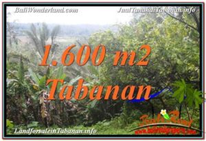 Magnificent PROPERTY 1,600 m2 LAND SALE IN Tabanan Selemadeg TJTB348