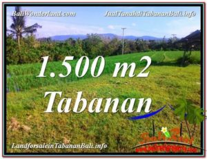 FOR SALE Beautiful PROPERTY 1,500 m2 LAND IN Tabanan Selemadeg TJTB353