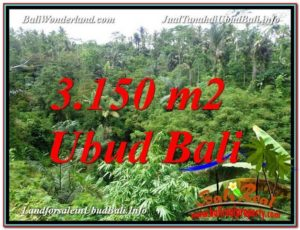 Affordable PROPERTY LAND SALE IN Ubud Tegalalang BALI TJUB608