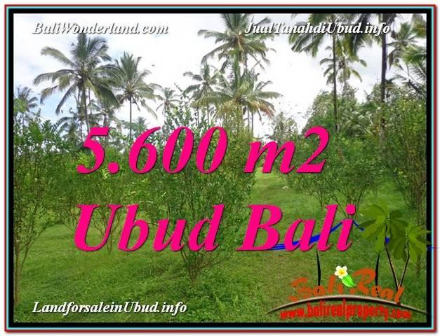 Beautiful PROPERTY Ubud Tegalalang 5,600 m2 LAND FOR SALE TJUB609