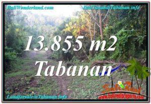 Affordable LAND IN TABANAN FOR SALE TJTB335