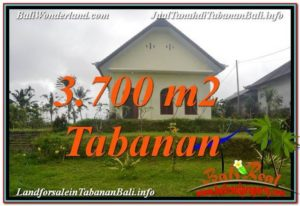 FOR SALE 3,700 m2 LAND IN TABANAN TJTB336