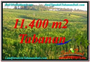 Magnificent PROPERTY LAND IN Tabanan Selemadeg BALI FOR SALE TJTB339