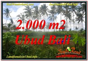 FOR SALE Beautiful PROPERTY LAND IN UBUD TJUB625