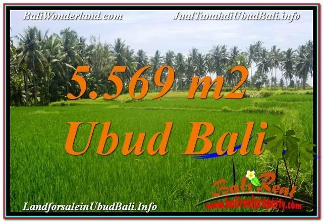 Sentral / Ubud Center BALI 5,569 m2 LAND FOR SALE TJUB642