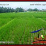 FOR SALE Beautiful PROPERTY LAND IN Canggu Pererenan BALI TJCG219
