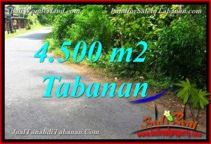 Beautiful 4,500 m2 LAND SALE IN Tabanan Selemadeg TJTB380