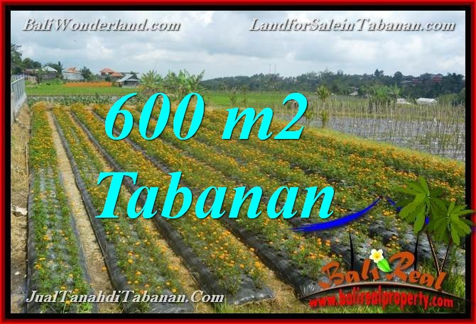 Affordable PROPERTY LAND FOR SALE IN TABANAN Bedugul BALI TJTB372