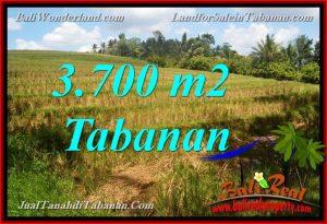 Exotic 3,700 m2 LAND SALE IN Tabanan Selemadeg BALI TJTB377