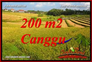Exotic LAND FOR SALE IN CANGGU BRAWA BALI TJCG228