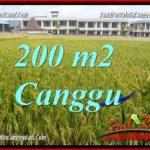 FOR SALE Exotic 200 m2 LAND IN CANGGU BALI TJCG229